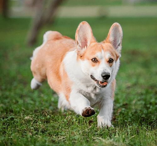 Jak nauczyć psa aportować?