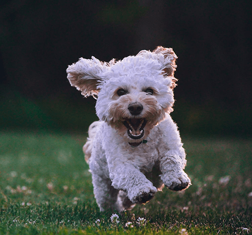 Jak nauczyć psa posłuszeństwa?