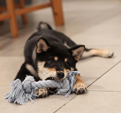 Jak oduczyć psa gryzienia?