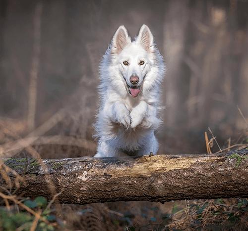 Jak oduczyć psa skakania?
