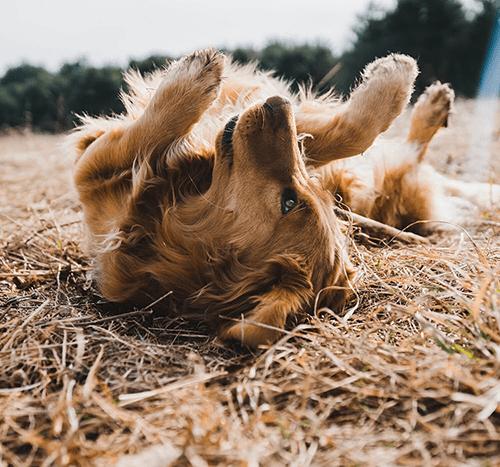 Jak uspokoić psa? Sposoby na zdenerwowane psy
