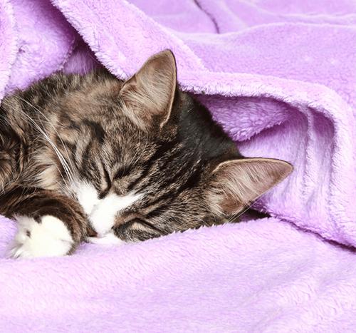 Kot miauczy w nocy - co to oznacza?