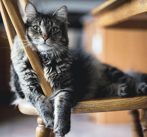 Smutny kot – jak poprawić mu nastrój? Jak rozpoznać kocią depresję?