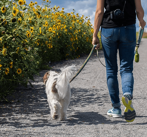Spacer z psem – jak długo i jak często spacerować?
