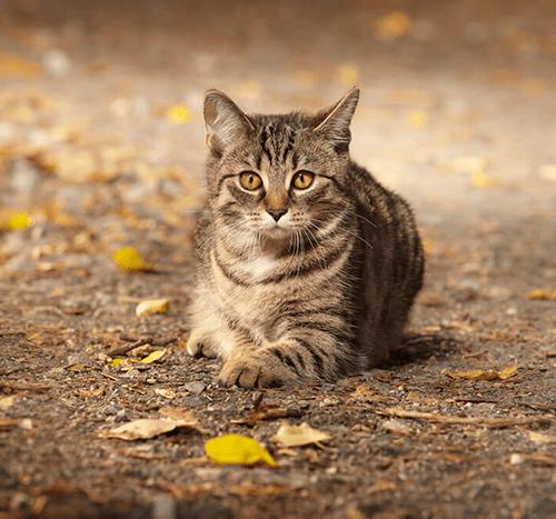 Suchy nos u kota – o czym może świadczyć?