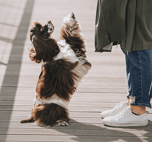 Sztuczki dla psa – proste triki, których możesz nauczyć psa!