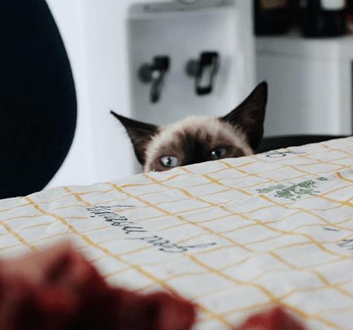 Wołowina dla kota – czy to dobre rozwiązanie?