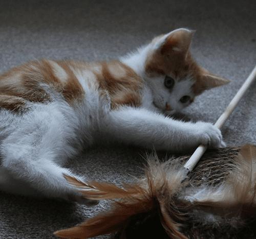 Zabawki dla kota – które są bezpieczne?
