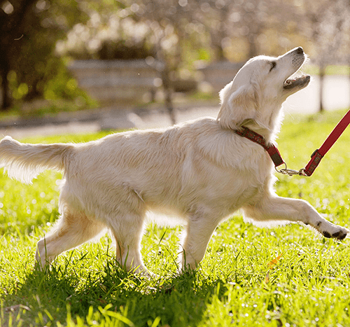 Zabawy z psem – poznaj popularne psie zabawy!