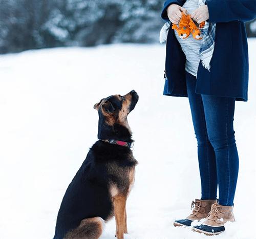 Zazdrosny pies – jak radzić sobie z psią zazdrością?
