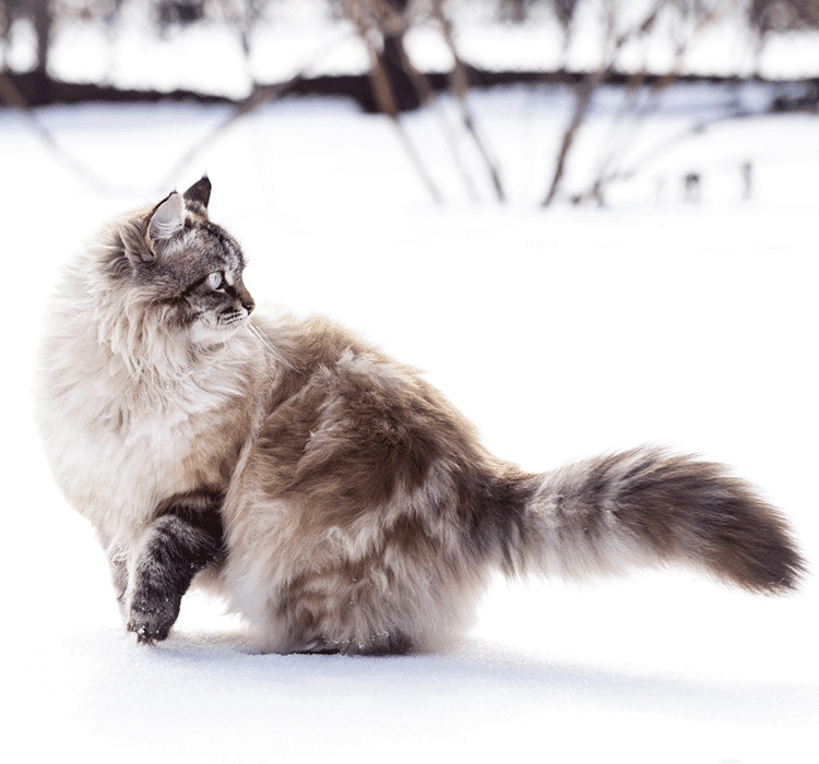 HOW CAN THE RIGHT NUTRITION SUPPORT YOUR CAT'S NATURAL DEFENCES