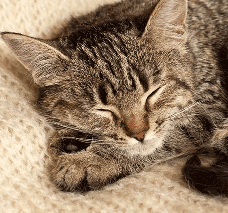 HOW MUCH SLEEP DOES MY KITTEN NEED?