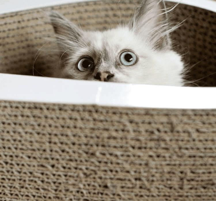 BRINGING A NEW CAT HOME