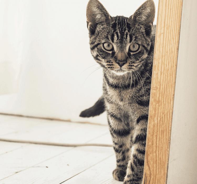 LEAVING MY CAT ALONE