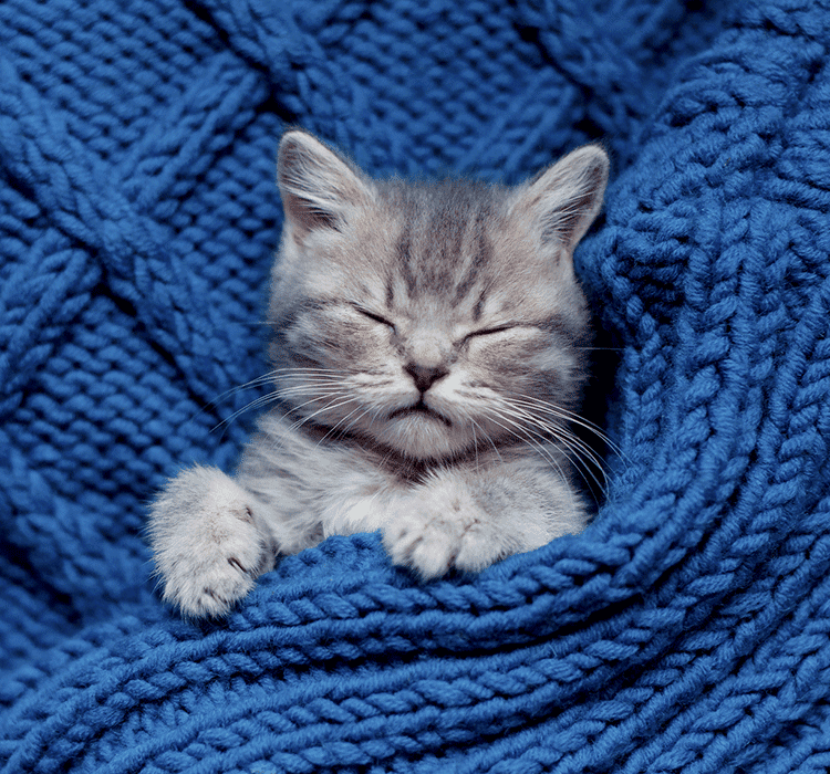 HOW TO CARE FOR NEWBORN UNWEANED KITTENS