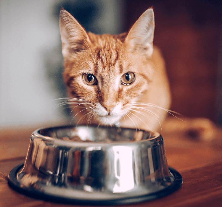 BENEFITS OF MIXED-FEEDING FOR OLDER CATS