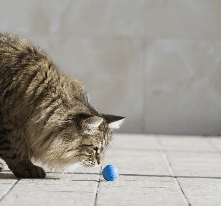 GAMES FOR CATS: WHY IS IT SO IMPORTANT?