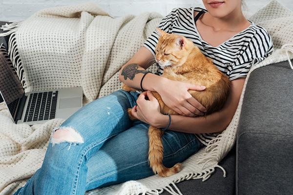 Ciąża kota – ile trwa? Jak dbać w tym czasie o przyszłą kocią mamę?