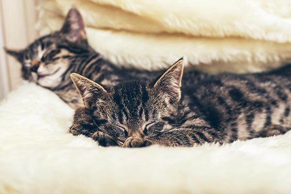 Ciekawostki o kotach – o tym nie miałeś pojęcia!