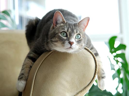 Co jedzą koty - poradnik jak dbać o pełne brzuszki naszych ulubieńców