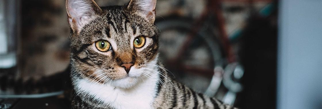 Co mogą jeść koty? Przysmaki, które powinieneś włączyć do menu pupila