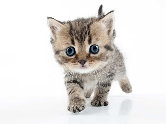 Co może jeść kot? Produkty, które śmiało możesz wcielić do jego diety