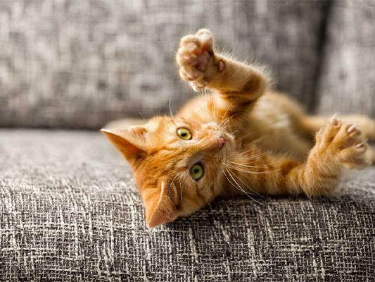 Czego nie może jeść kot? Lista produktów, które zagrażają zdrowiu naszego kotka