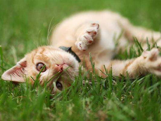 Czy kot może jeść lody? Nowy smak na upalne dni dla małego smakosza?