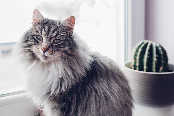 Czy kot może jeść makaron? Czy pszenna pasta powinna widnieć w codziennym jadłospisie kota?