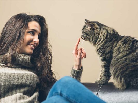Czy kot może jeść ziemniaki? Czy to warzywo podbije jego kocie podniebienie?