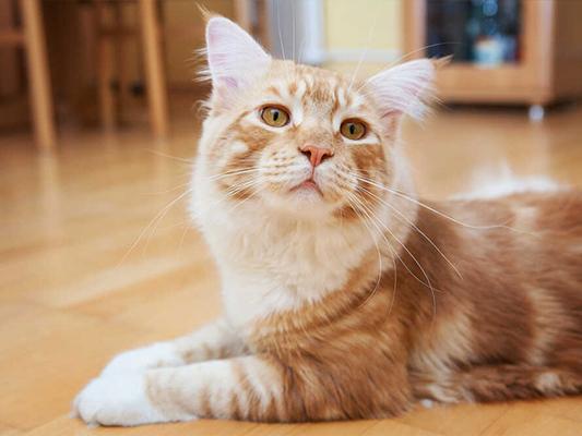 Czy storczyk jest trujący dla kota?