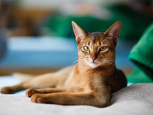 Czym karmić kota - poradnik dla wytrawnych opiekunów