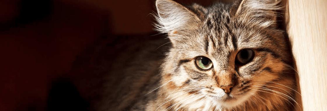 Czipowanie kota – na czym polega i ile kosztuje?