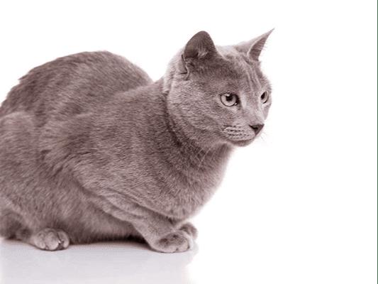 Dieta dla kota - jak odpowiedzialnie urozmaicić jadłospis przysmakami?