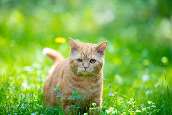 Dlaczego kot boi się ogórka? Odpowiedź jest prozaiczna!