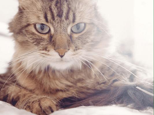 Dobra karma dla kota - smaczny posiłek pełen wartości odżywczych