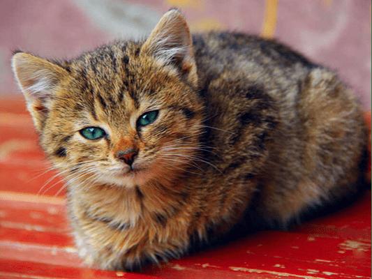 Dobra mokra karma dla kota - sprawdź, co zaspokoi pragnienia naszych podopiecznych!