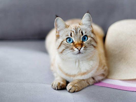 Domowe jedzenie dla kota - pomysł na danie w codziennym jadłospisie