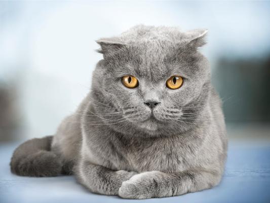 Dzień Przyjaciela, bo kot to najlepszy przyjaciel!