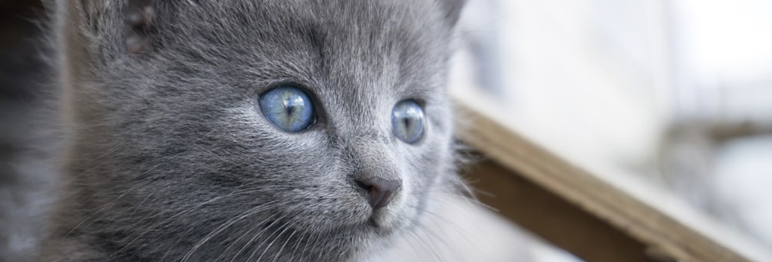 Fontanna dla kota – dlaczego warto kupić?