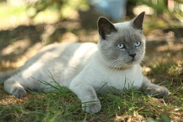 Gruby kot - jak uchronić naszego podopiecznego przed nadwagą?