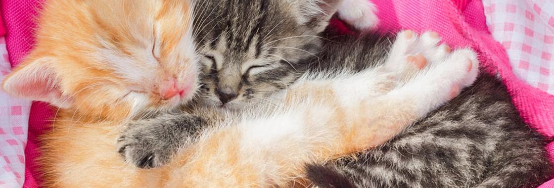 Gry dla kotów – aplikacje i gry, które pokocha Twój kot