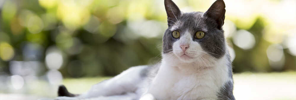 Ile kot powinien jeść? Sprawdź, jak karmić, ale nie przekarmiać pupila