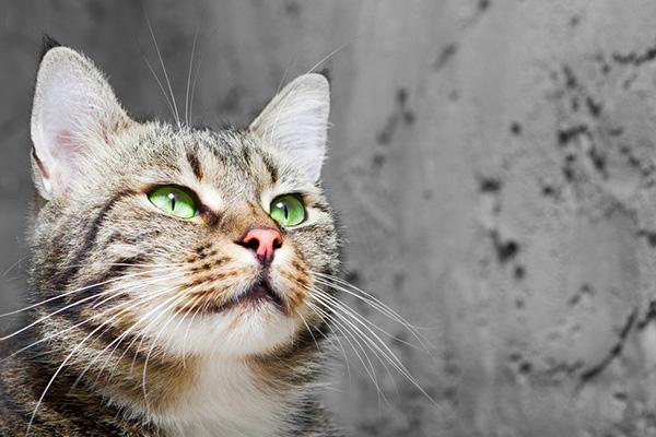 Imiona dla kota – pełny katalog inspirujących imion