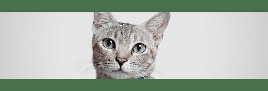 Jajko dla kota - czy nasz podopieczny może je jeść?