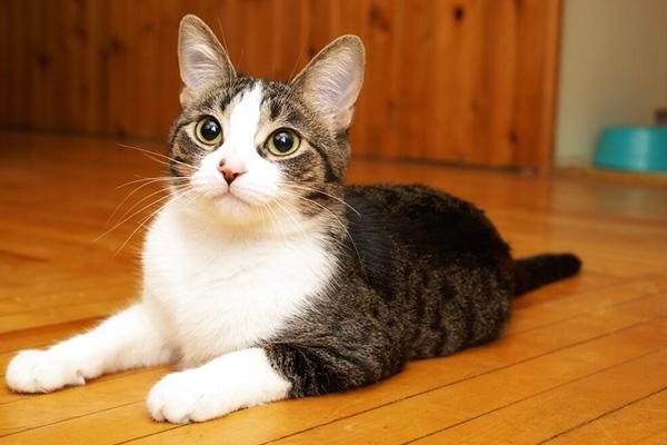 Jak długo rośnie kot - kiedy kocię stanie się dorosłym kocurem?