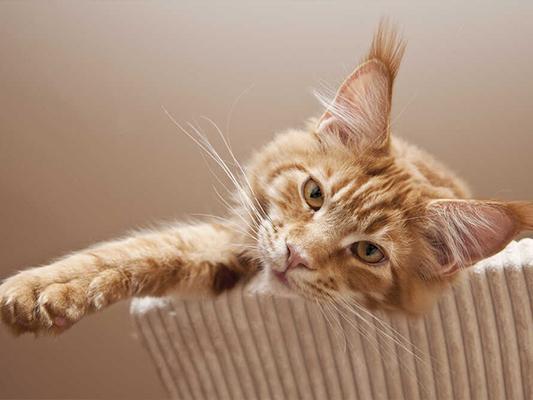Jak karmić kota - sprawdzone porady dla stroskanych opiekunów