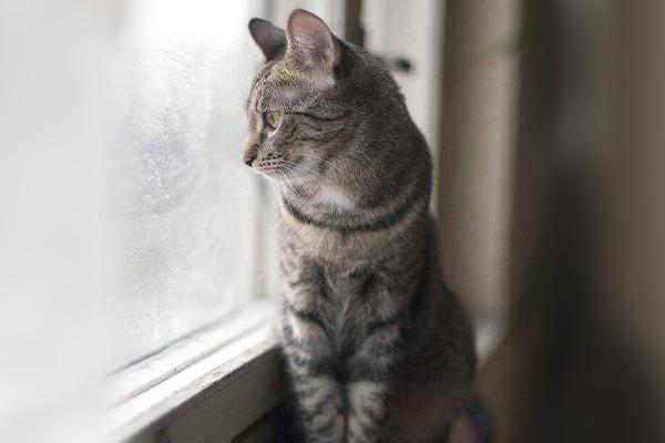 Jakie mięso dla kota zadowoli naszego łasucha?
