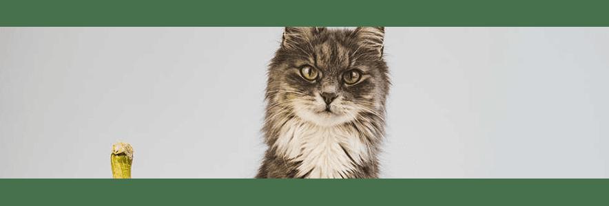 Jakie warzywa dla kota? Sprawdź, co urozmaici jego zbilansowany jadłospis