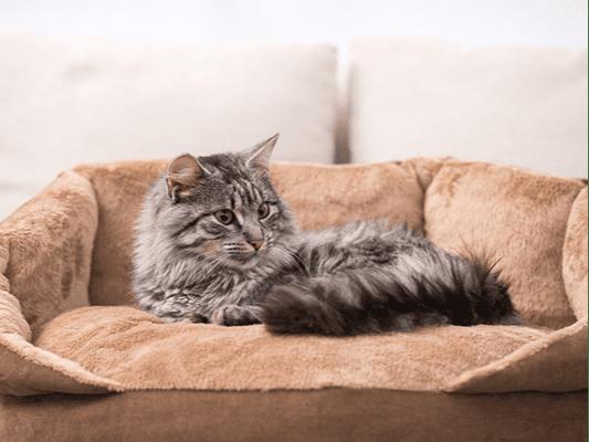 Jedzenie dla kota, które podbije jego kocie serduszko